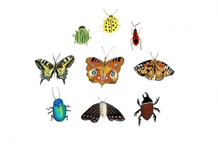 Big colorful hand drawn doodle set with insects. Beetle, butterfly, moth, worm collection in outline style. Isolated on white. illustration