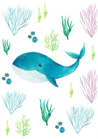 blue whale swims over the blue algae on a white background, watercolor whale.