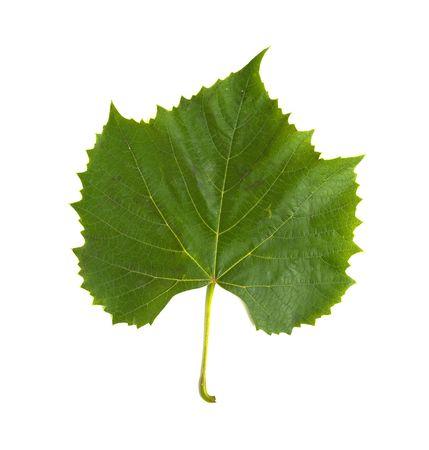 leaf grape: La hoja verde de uva sobre un fondo blanco, aislado  Foto de archivo