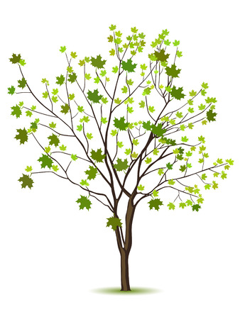 bark: Tree with green leafage isolated on a white Illustration