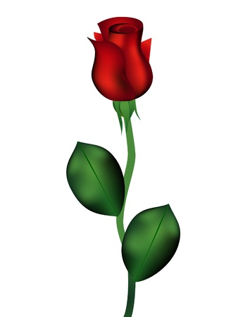 rose stem: Red rose isolated on white background Illustration