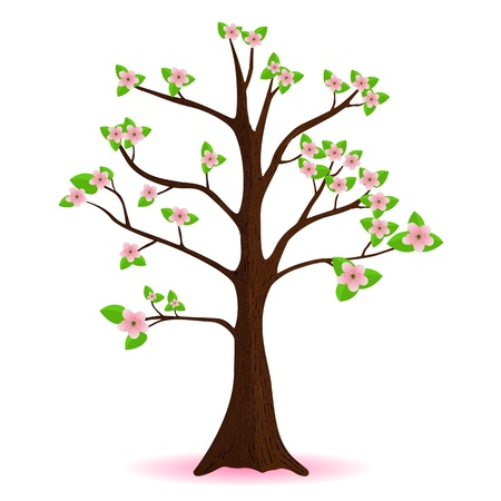 cherry blossom, flowering spring tree, vector Vector