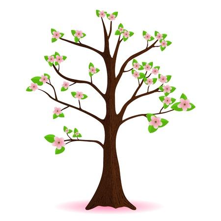 cherry blossom, flowering spring tree, vector Vector
