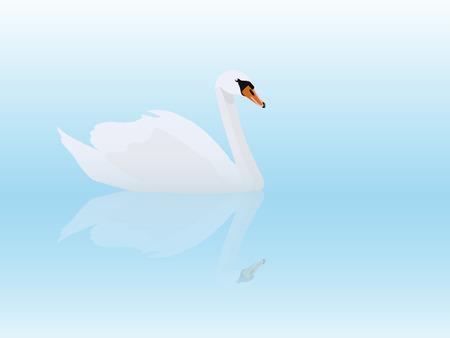 White swan, vector