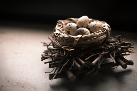 Natural quail eggs in the nest on light background. Spring and Easter holiday concept with copy space. Black and white.