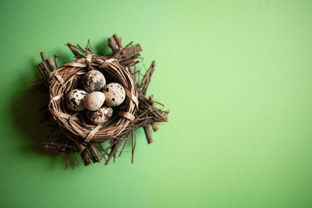 Natural quail eggs in the nest on light green background. Spring and Easter holiday concept with copy space.