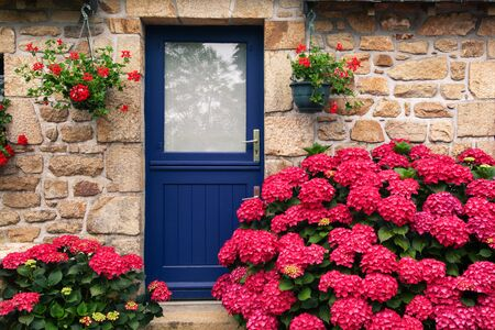 Exterior beautiful detail of a stone cottage with blue colour door and bright pink hortensia hydrangea.