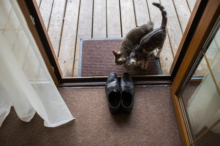 Black men's leather shoes are standing on the threshold. Two stray cats sniff men's shoes. Wedding details. Stockfoto