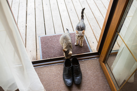 Black mens leather shoes are standing on the threshold. Two stray cats sniff mens shoes. Wedding details. Stock Photo