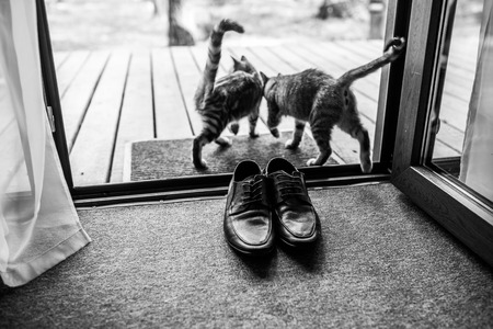 Black mens leather shoes are standing on the threshold. Two strays cat near the mens shoes. Wedding details. Black and white photo. Stock Photo