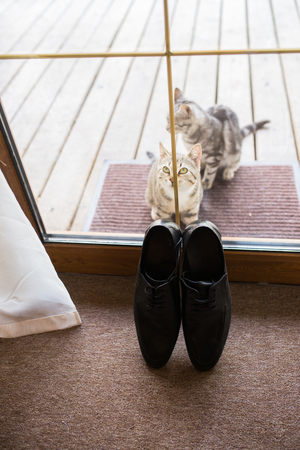 Black mens leather shoes are standing on the threshold. Two stray cats near the mens shoes. Wedding details. Stock Photo