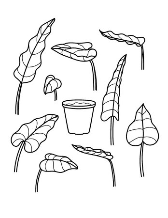 Vector black and white line illustration of houseplants. Hand Drawing sketch of different leaves with a pot