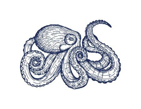 Vector card with an octopus on a white background. Beautiful design with animal print for t-shirt. Trendy poster for home decor. Vector hand drawing of a ballpoint pen isolated from the background. Stock Illustratie