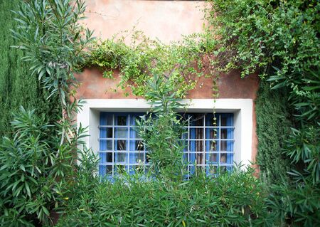 Old house covered in greens in Provence, France
