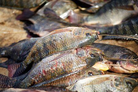 Fresh Catch of Tilapia Fish on Sale at Nampan Market, Inle Lake, Myanmar