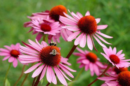 medecine: flower