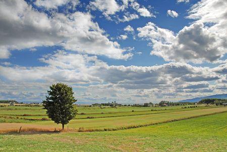 single tree on farmland Stock Photo - 541530