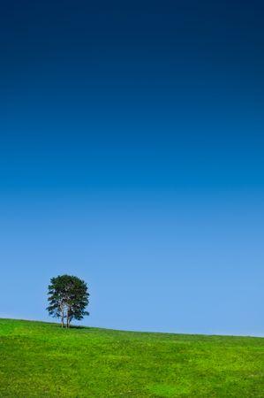 single tree in a lovely green field blue sky photo