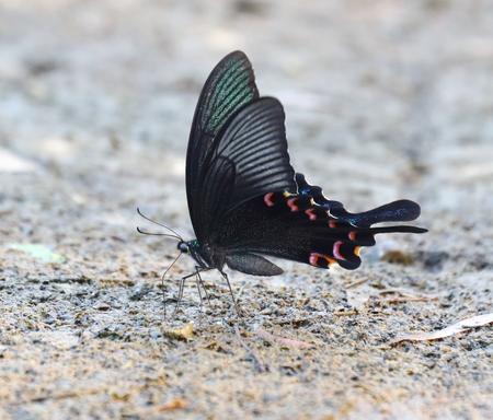 black: black butterfly Stock Photo