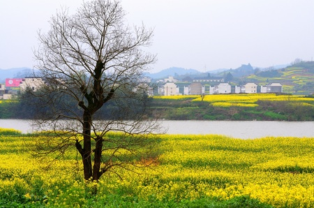 Southern Anhui landscape view during spring