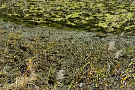 Reed Sea in Jiuzhaigou