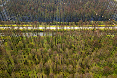 aerial photo of forest Stock fotó