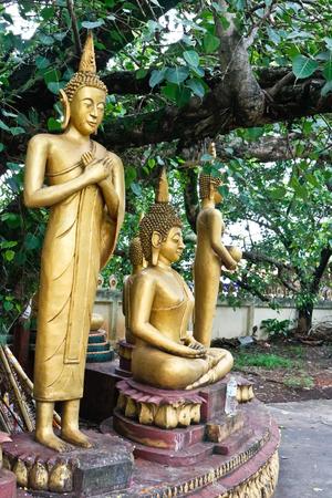 pipal: Buddha under Bo tree in Lao temple, Laos