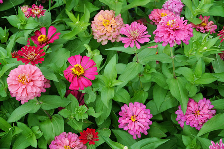 Flowers blooming at garden