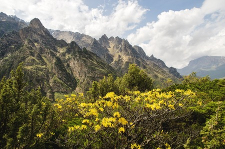 Caucasian beauty in the mountains where tsyet yellow flowers on the background of sharp rocks and beautiful clouds