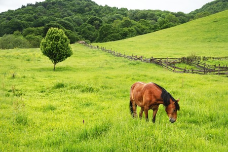 A brown-red horse grazes on a green field against a beautiful tree