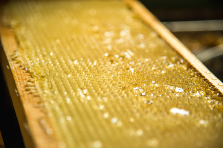Unfinished fresh honey in honeycombs that are placed in a frame