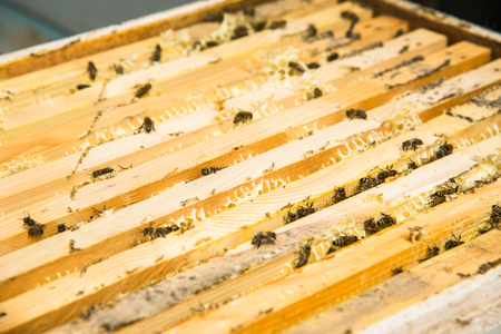 Close-up of a bee working collecting honey Stock Photo