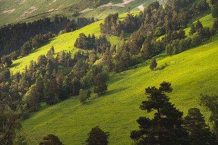 Landscape with pine forests in the mountains slope in summer on sunset Stock fotó
