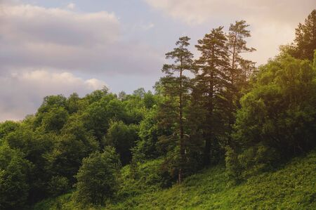 Landscape with pine forests in the mountains slope in summer on sunset 写真素材