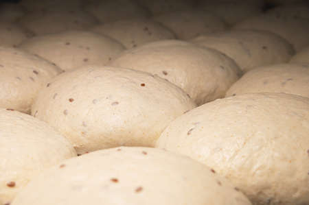 The uncooked round buns of dough are placed on a metal tray. Hamburger bun dough