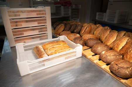 Fresh rolls of craft craft bread lies on the table in the bakery. Loading hot bread into white plastic boxes for transportation