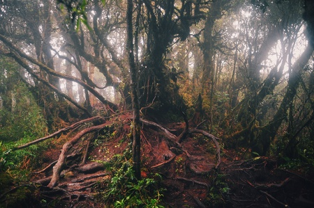 mossy: Mossy forest Stock Photo