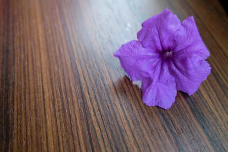 petunia wild: Purple wild petunia flower on the table