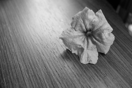 petunia wild: Wild petunia on the table in black and white tone Stock Photo
