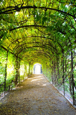 walk path: Walk path under green shady trees arch Stock Photo