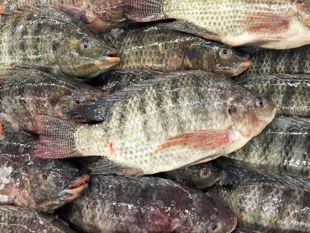 fish market: Fresh yummy nile tilapia in fish market Stock Photo