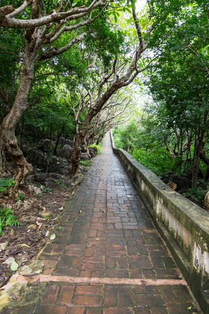 Wet and slippery brick path in tropical forest. Stock Photo