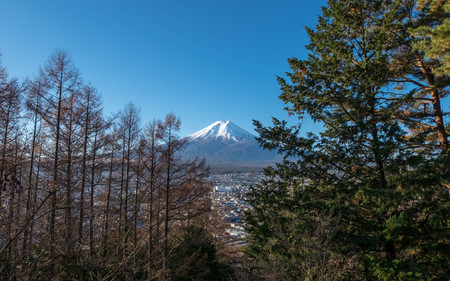 Fuji Mount view from stairs up to Chureito pagoda with trees aside.