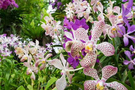 Colorful dotted white and red orchid flowers. Background outdoor shot. Stock Photo