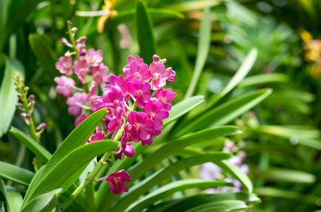 Beautuful purple orchid flowers with buds in branch.