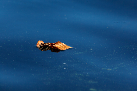 Natural abstract background. Yellow dry leaf lying on the blue surface of the water close-up. Stock Photo