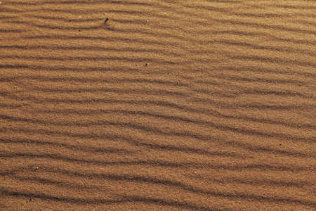 Texture sandy surface with the ripples formed by wind sand. Sand dunes texture background. Wood chips stuck of the sand. Stock Photo