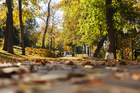 Dry yellow leaves on the sidewalk in the autumn Sunny Park. Bottom view. Selective focus. 写真素材