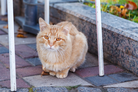 Lonely sad red stray cat sitting on the sidewalk on a cool autumn day, hoping to find a home and owner.