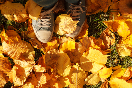 Autumn background, leaves, feet and shoes. Conceptual image of feet in sneakers on yellow autumn leaves. Shoes for nature walks